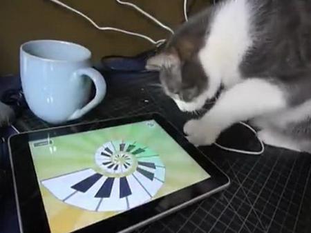 Кот и iPad