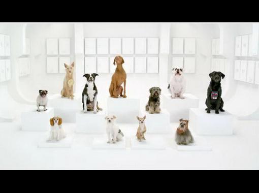 Собаки исполняют марш Империи