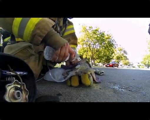 Пожарный спас котёнка (Fireman Saves Kitten)