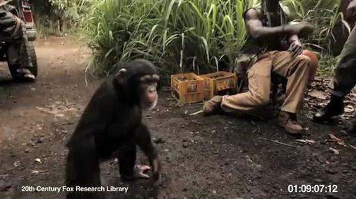 Планета обезьян: начало / Ape With AK-47