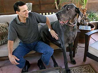 Большая собака подала заявку в Книгу рекордов Гиннесса