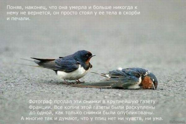 Несчастная любовь, которая довела до слез полмира. ФОТО