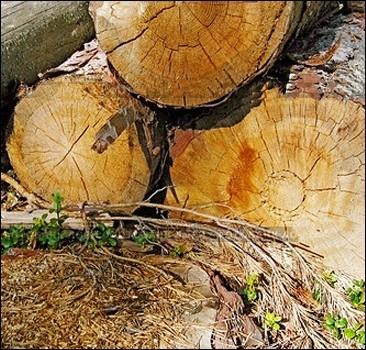 На Прорезной сносят фонтан, возле Центрального загса рубят деревья