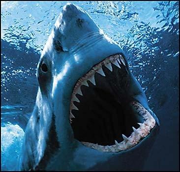 Девочка отбилась от акулы доской для плавания