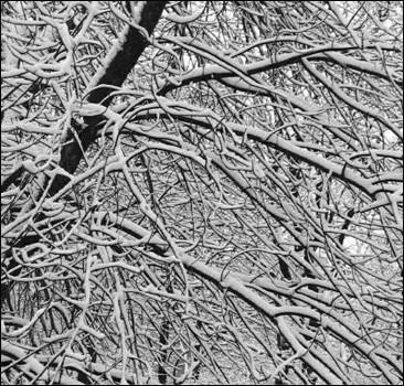 Многие деревья не переживут зиму