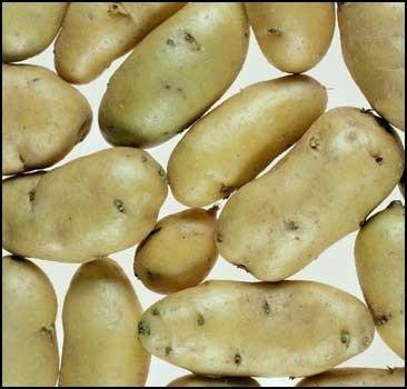 В Украине не хватает картофеля. Африка нам поможет