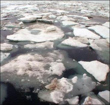 Осторожно, рыба! На Киевщине крупная экологическая катастрофа