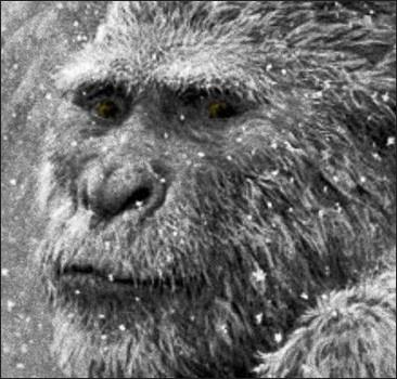 В России найден снежный человек