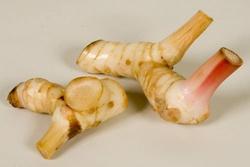 Лечебный корень имбиря