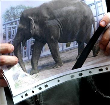 Директора киевского зоопарка отстранили из-за слона