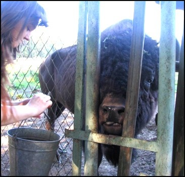 """Защитники животных требуют разобраться с Киевским зоопарком-""""концлагерем"""""""