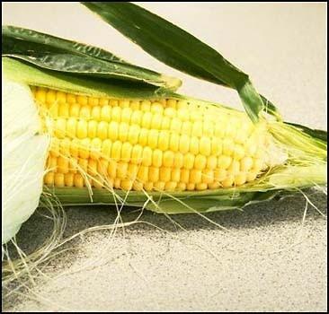 Украина открестилась от диоксиновой кукурузы