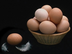 О пользе куриного яйца