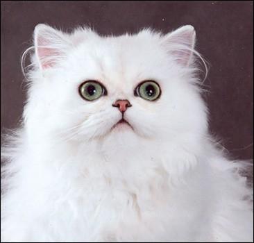 Кошка - самое любимое домашнее животное