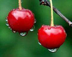 Заплыли жирком – налегайте на вишни