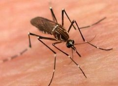 В Эстонии прошел чемпионат по охоте на комаров