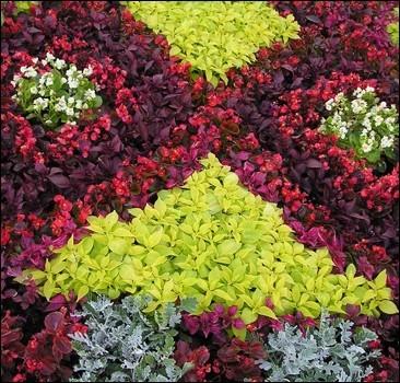 Выставка цветов превратится в Реку вышиванок