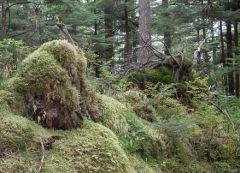 Немецкий банкир зарыл свои миллионы в лесу