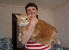 У дончанки живет кот-гигант массой 17 кг