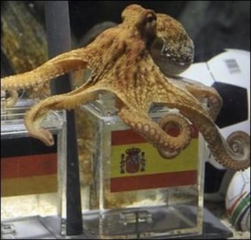 Самый знаменитый футбольный оракул - осьминог Пауль. ФОТО