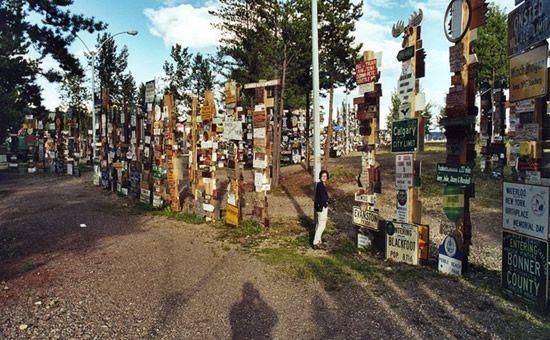 Лес усыпанный дорожными знаками (10 фото)