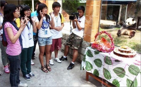 30-ти летний юбилей у панды из Китая (9 фото)
