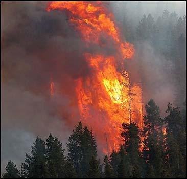 В Крыму горят леса Большой Ялты