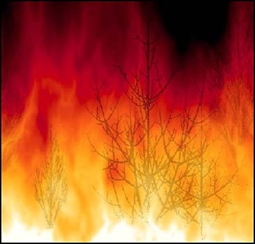 Начались пожары в Украине! Горит 100 гектаров леса