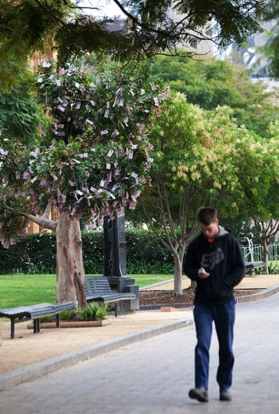 На дереве растут деньги (6 фото)