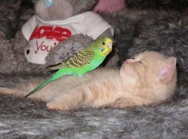Несовместимая дружба (15 фото)