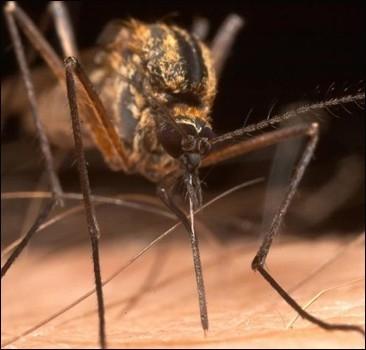 В Украину летят орды насекомых-паразитов