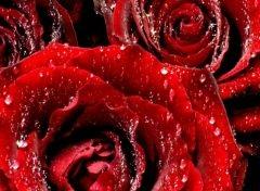 В Китае жених подарил невесте 99999 алых роз