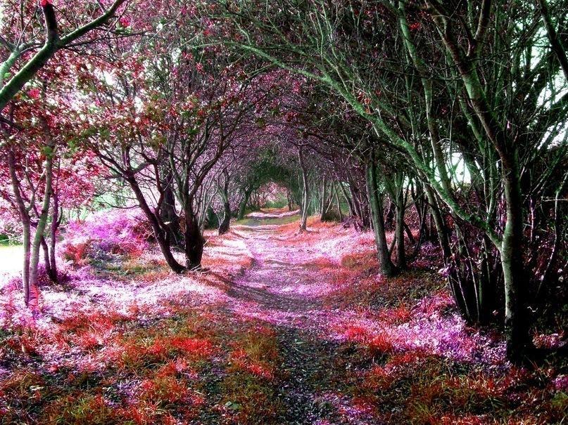 Фантастический лес. Кантабрии, Испания.