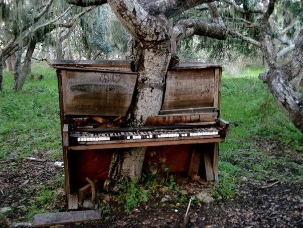Дерево–фортепиано в Монтерей, Калифорния.