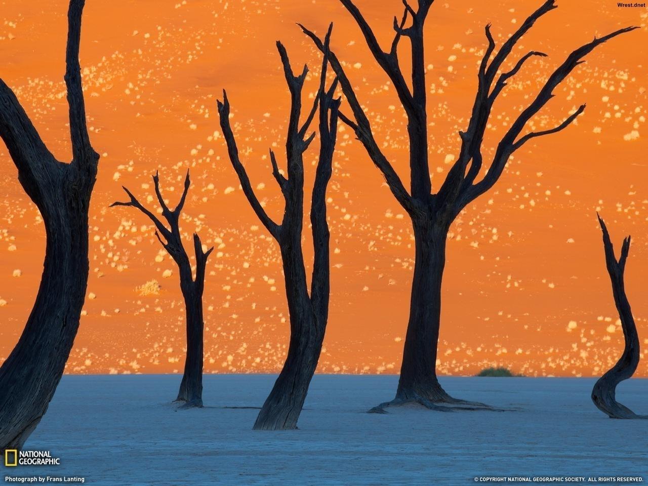 Пустыня Намибии