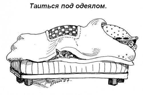 Кошкины обязанности в доме :)