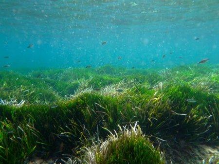 Трава которой около 200 тыс. лет