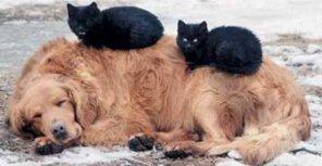 В Киеве готовятся массово травить бездомных кошек и собак
