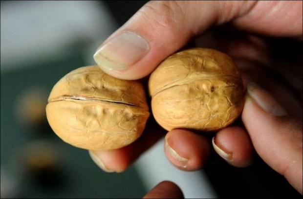 Как в Китае подделывают грецкие орехи