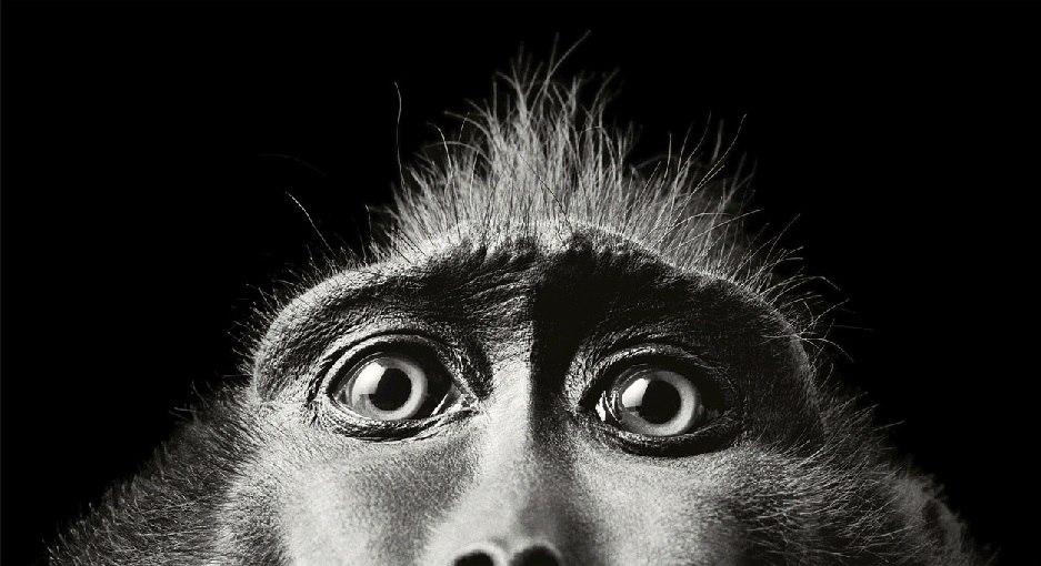25 коротких факто о животных