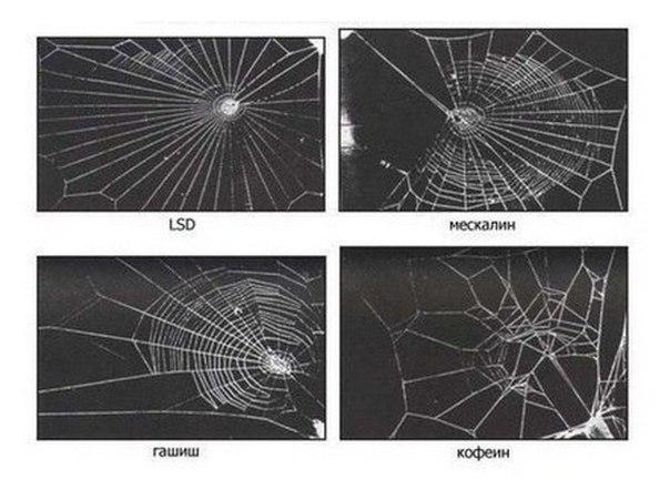 Сети сплетенные пауками, которых кормили мухами с инъекцией наркотика.