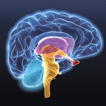 Учёные провели симуляцию активности головного мозга на суперкомпьютере