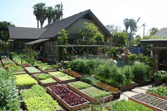 Как семья на 4 сотках собирает 3 тонны овощей и кормит все рестораны города (видео)